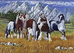 Horse Nation