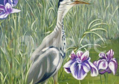 Grey Cranes in Spring